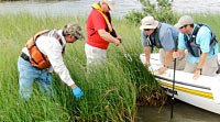 Gulf Restoration Efforts